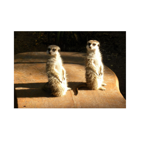 QFL. Lemuri